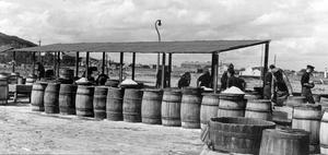 Barrels of fish being made ready for shipping in Ardglass. 19/8/1953