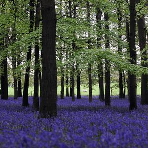 The RSPB has called on the Government to invest more in public forests