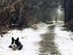 Collie in winter, Wexford. Submitted by Mikeymo, England