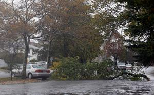 LONG BEACH, NY - OCTOBER 28: A fallen tree blocks Franklin Blvd as high tide and winds from Hurricane Sandy combine to flood the area  on October 28, 2012 in Long Beach, New York. Hurricane Sandy, which threatens 50 million people in the eastern third of the U.S., is expected to bring days of rain, high winds and possibly heavy snow.  (Photo by Mike Stobe/Getty Images)