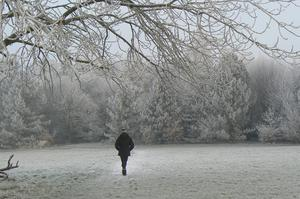 Lone walker at Lady Dixon Park Malone. By Peter Breene