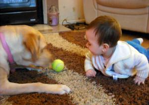 My wee grandson Jack playing ball with Honey our dog.