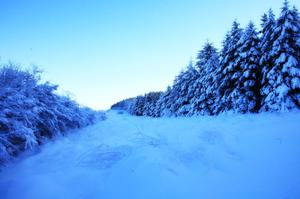 Real Christmas trees,  Limavady mountain. By Paul Davis from Coleraine