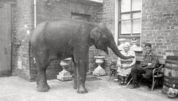 Sheila the elephant: Northern Ireland woman Denise Weston Austin kept a baby elephant in her backyard during Belfast Blitz