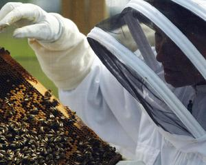 Agriculture Minister Michelle Gildernew is to draw up a plan to rescue bees.