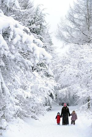 A family walking through a forest in the mountains overlooking Belfast in County Antrim