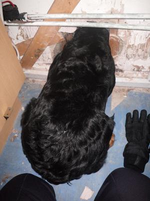 The dog got its head stuck in an air vent while trying to escape after it had been abandoned in a flat in Luton