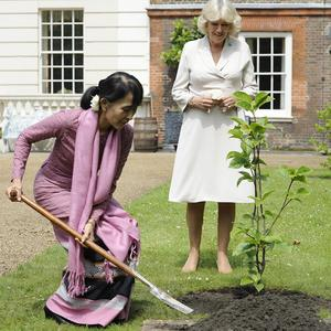 Aung San Suu Kyi plants a magnolia tree in the gardens of Clarence House, watched by the Duchess of Cornwall