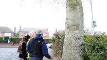 Residents talk to Roads Service staff to postpone cutting down the beech tree in Glastonbury Avenue, north Belfast