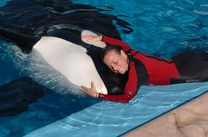 Dawn Brancheau with a killer whale at SeaWorld. Brancheau was killed in an accident with a killer whale at the SeaWorld Shamu Stadium Wednesday afternoon, Feb. 24, 2010.