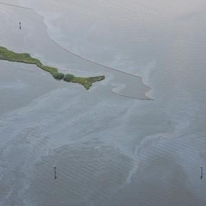 BP has said it might drill again in the Gulf of Mexico despite the oil spill