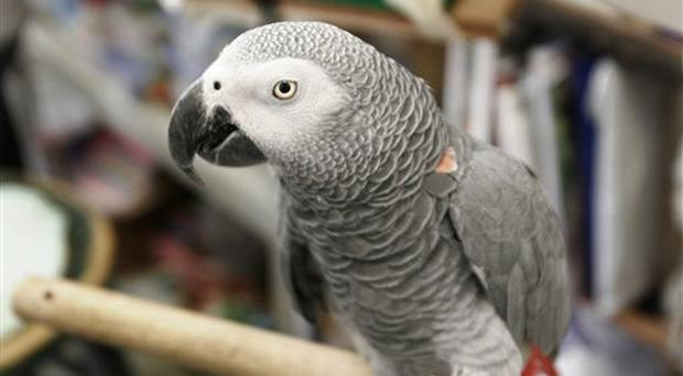 Alex, the university's African grey parrot that could count to six, identify colors and even express frustration with repetitive scientific trials