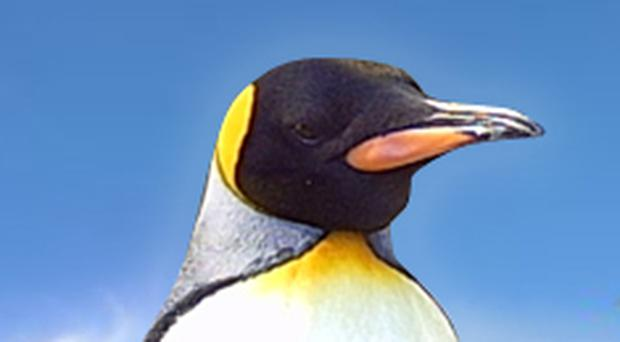 The penguin has adorned everything from television to paperback. Now a new film is set to seal it's place in popular culture.