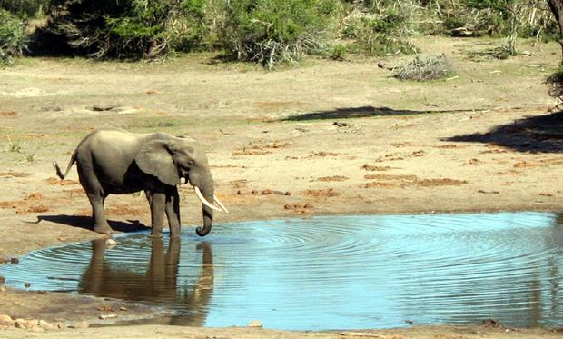 Wonderful pictures can be taken at the watering hole