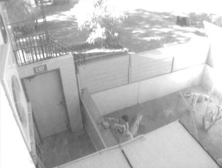 In this CCTV image provided by the Alice Springs Reptile Centre, a 7-year-old boy throws a turtle over a wall in Alice Springs, Australia, Wednesday, Oct. 1, 2008. The boy broke into a popular Outback zoo, fed a string of animals to the resident crocodile and bashed several lizards to death with a rock, the zoo's director said