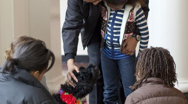 US President Barack Obama pets the family's new dog, Bo, a six-month old Portuguese water dog, as his wife, First lady Michelle Obama (L), and daughters, Sasha and Malia (R) look on in the White House in Washington, DC