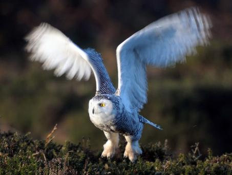 A payroll giving product called Owl is used by Royal Mail staff to assist the work of the Woodland Trust