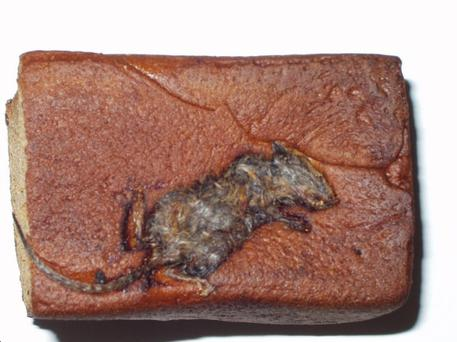 The dead mouse was found in the bread after a customer bought the loaf in the Ballymoney area
