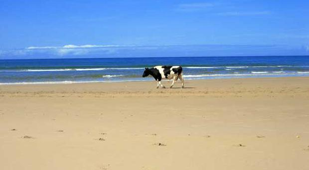 Daisy at Whitepark Bay. Submitted by Stephan Preusser, Carrickfergus