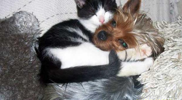 Belfast Telegraph PETS GALLERY - Love is grand. Submitted by June, Ireland