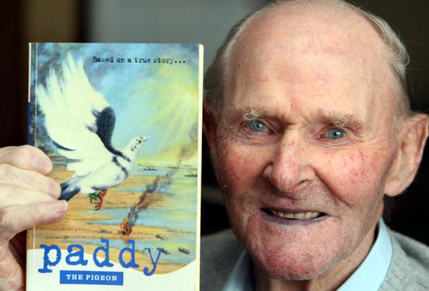 John worked with Paddy the pigeon, who was awarded the Dickin medal, the animal equivalent of the Victoria Cross for his war efforts during the D-Day landings