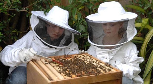 George (13) and Phoebe Patterson (9), wearing their protective suitscheck their bees at the hive in the back garden of their Belfast home