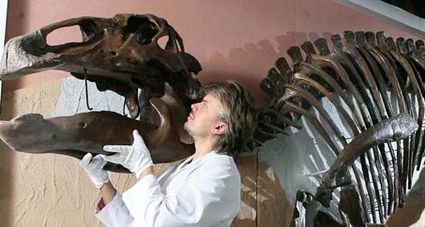 Specialist conservator Nigel Larkin installs the last piece of the skull of the 6 metre long Edmontosaurus dinosaur skeleton