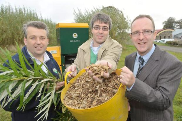 Clear growth — showing off their willow tree based bio energy fuel are (from left) Dr John Gilliland and Tom Brennan of Rural Generation with Des Gartland, InvestNI
