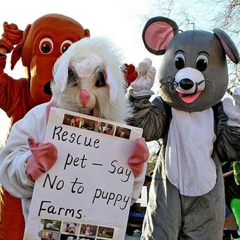 Animal Rights Action Network hold a protest in Dublin city centre