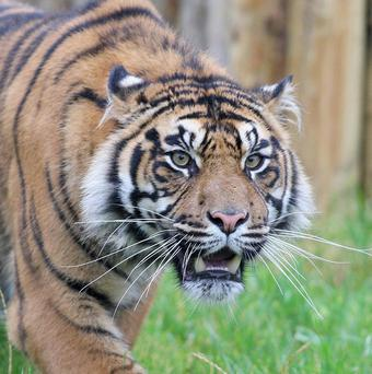 Belfast Zoo celebrates record visitor numbers