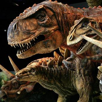 Scientists have concluded dinosaurs were wiped out by a giant asteroid strike on Earth