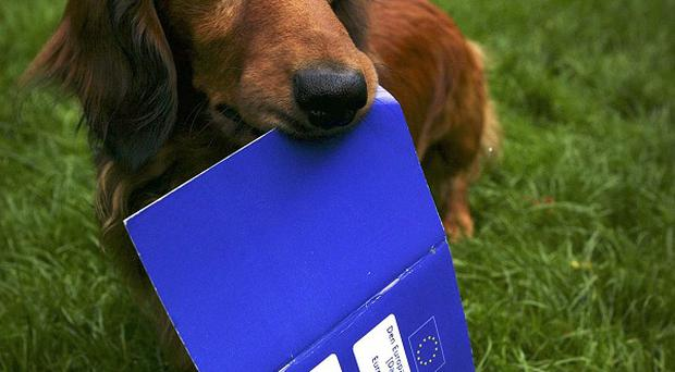 Dachshund Dante with his new pet passport