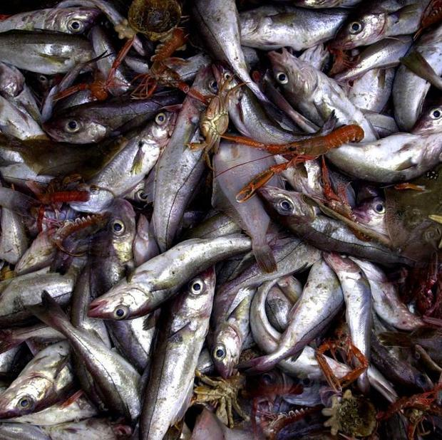 Much cod and haddock sold in Dublin is another species, researchers found