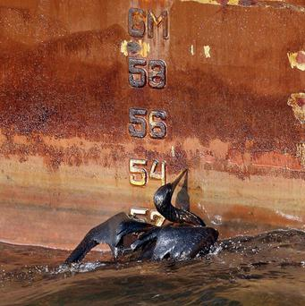 An oil soaked bird struggles against side of a ship in the Gulf of Mexico (AP)