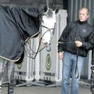 David Scally relaxes with his horse Starboard as a donkey gets used to life in its stall
