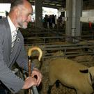 Balmoral Show. Roy Graham who is the Chief Sheep Supervisor