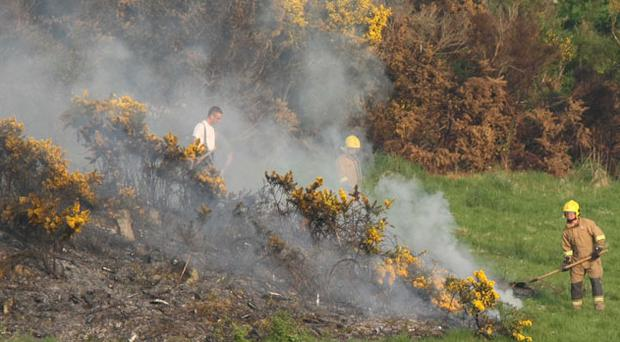 Newry: A gorse fire takes hold of a complete side of the mountain