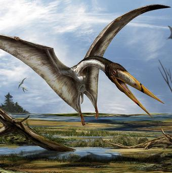 An artist's impression of a new pterosaur found during a dig in the Sahara