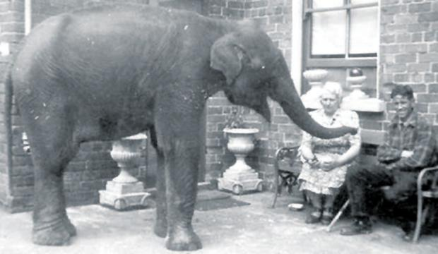 Baby elephant Sheila with Denise Austin at her home on Belfast's Whitewell Road