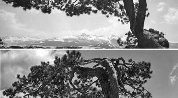Top, one of the photographs discovered by Rick Norsigian. Experts believe it to have been taken on the same day as the verified Ansel Adams photograph below