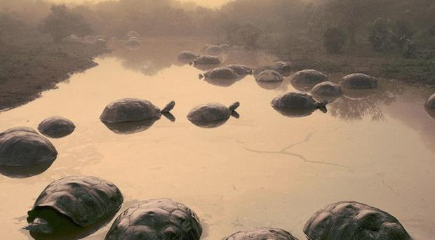 Tortoises on the Galapagos Islands