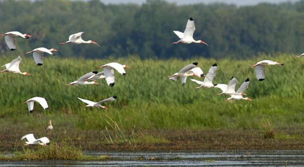 The UN added Florida's Everglades National Park to its list of World Heritage sites in danger. (AP)