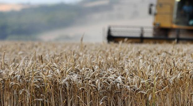 Russia has banned grain exports after a severe drought destroyed 20% of its wheat crop