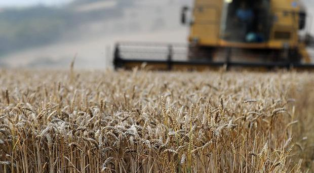 Russia says its wheat harvest will be down by more than a third