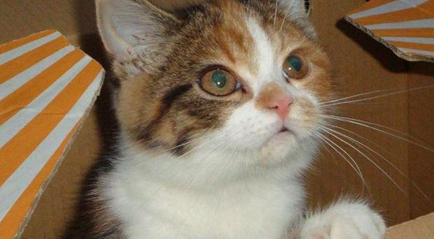There has been a sharp rise in the number of kittens abandoned, a charity warned