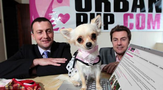 Lilly the chihuahua is dressed for success in a puppy coat from Urbanpup. Denis Kelly (right) from the Bangor company and James Foote of Ulster Bank joined her to celebrate securing a listing on Amazon for Urbanpup's canine clothing and accessories, a partnership with West End musical Legally Blonde and a five-fold turnover increase. Ulster Bank provided financial support through its £300m small business fund