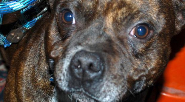 A policewoman has suffered serious injuries after being attacked by a Staffordshire bull terrier