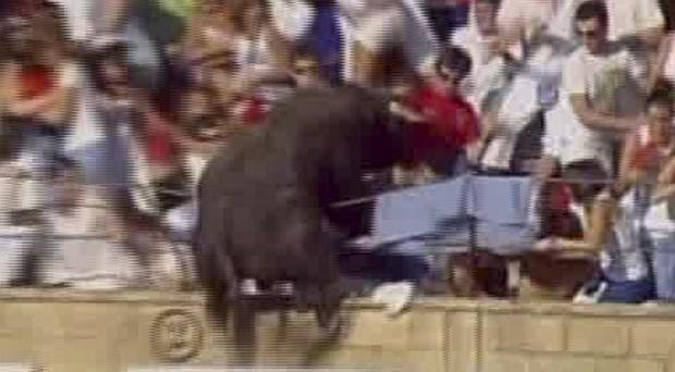 A TV image shows a bull leaping into a stand during a bullfight in Spain (AP Photo/ETB via APTN)