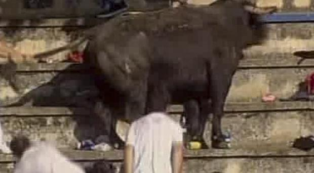 A TV image shows a bull being restrained after leaping into a crowd during a bullfight in Spain (AP Photo/ETB via APTN)