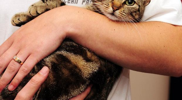 The RSPCA said it may prosecute a woman for dumping Lola the cat (pictured) in a wheelie bin
